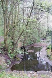 der Börn, dessen Wasser als Siepenbach weiterfließt