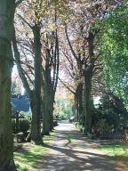 Blick auf den Hauptweg des Friedhofs von Westen.