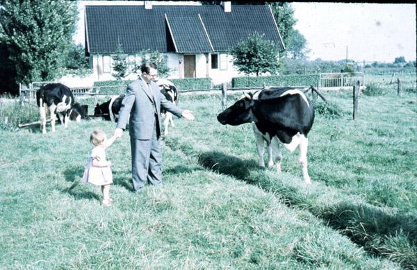 Angst vor friedlichen Kühen