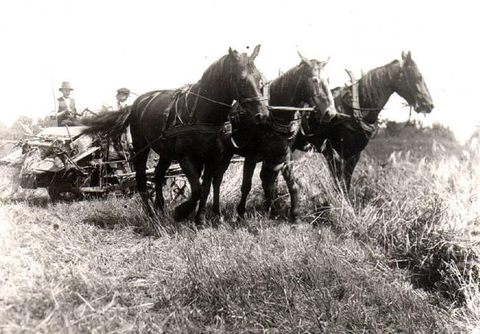 Landwirtschaft Westönnen